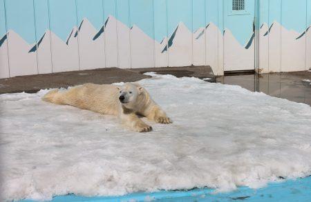 ドライフ 釧路市動物園 キロル パクパクタイム