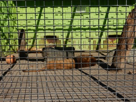 ドライフ 釧路市動物園
