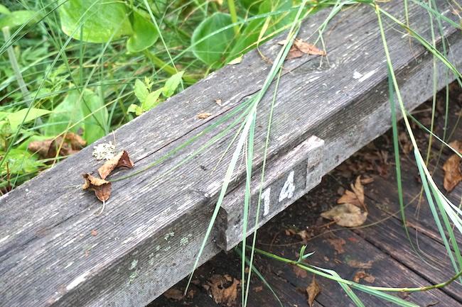温根内木道の番号