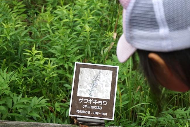 温根内木道散策の様子